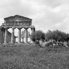 Paestum Tempio